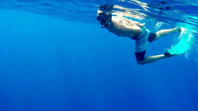 Baleines1