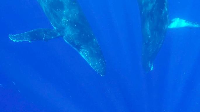 Baleines10