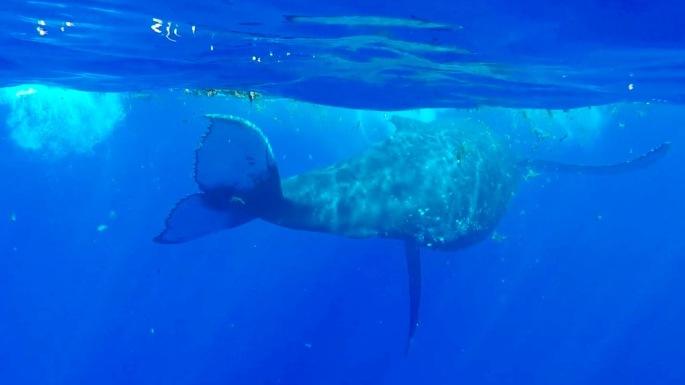 Baleines14