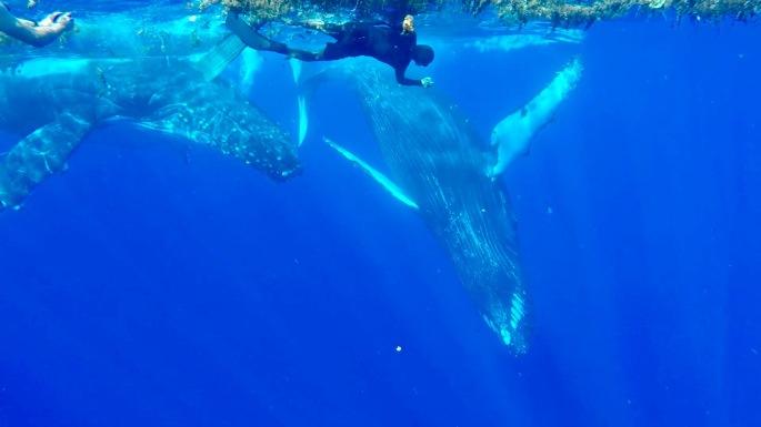 Baleines9