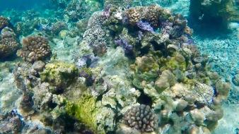 coraux 2