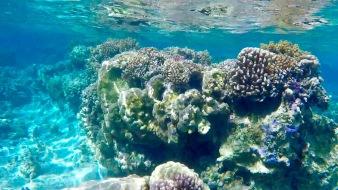 coraux 4